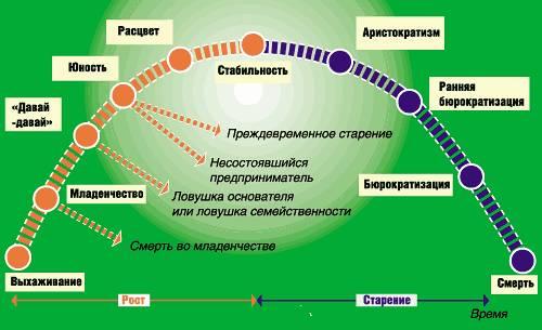 Посмотрим на модель жизненного цикла организации, предложенную американским консультантом Айзеком Адизесом (см. рис...